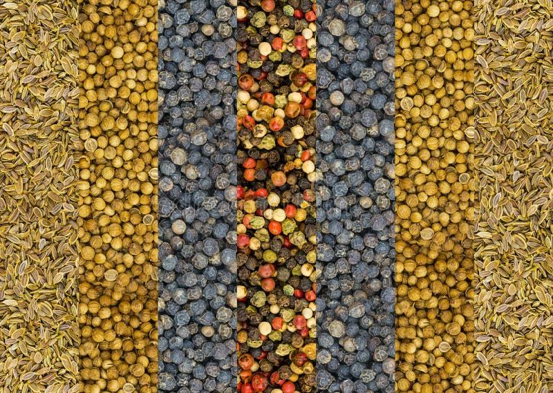 Пимент и смесь горячих семян укропа нашивки перцев красное белого и зеленой вертикальных сушат и предпосылки n специй основания к стоковое фото rf