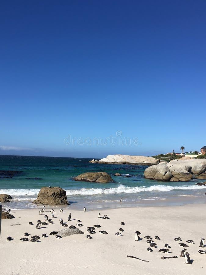 Пингвины в валунах приставают к берегу стоковое фото rf