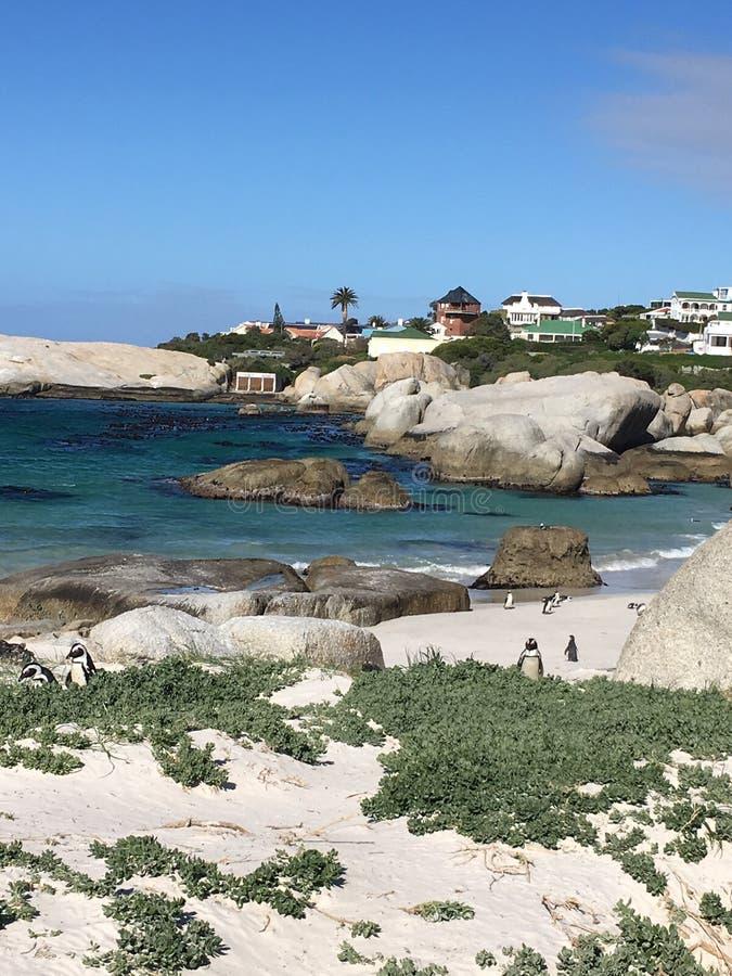 Пингвины в валунах приставают к берегу стоковые фотографии rf