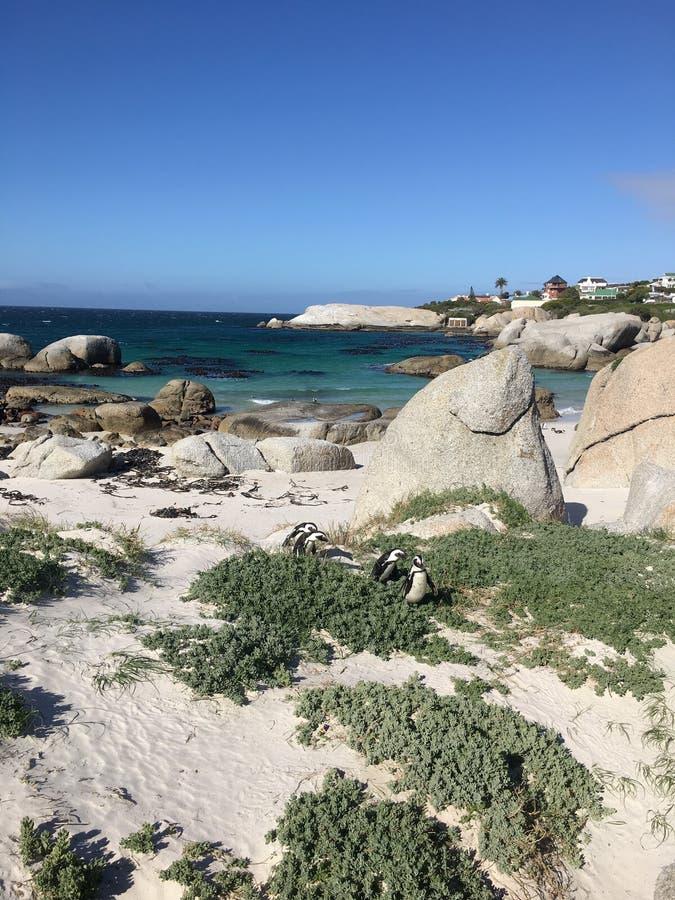 Пингвины в валунах приставают к берегу стоковое фото