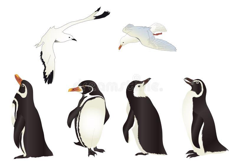Пингвины и чайки бесплатная иллюстрация