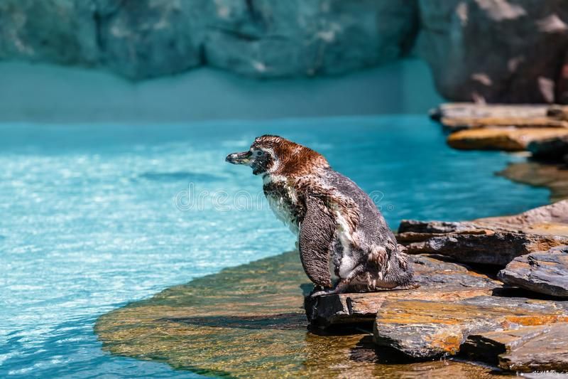 Пингвин в зоопарке стоковое изображение rf
