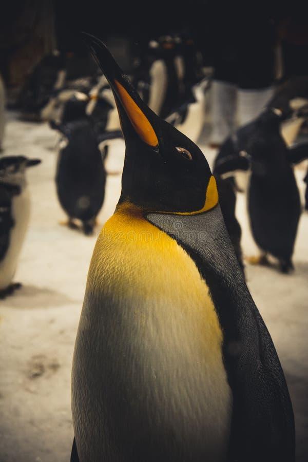 Пингвин императора стоковые фото