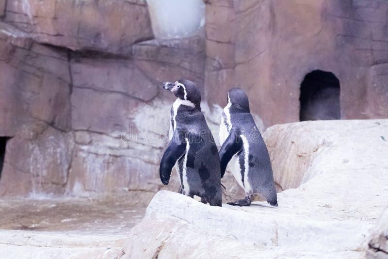 Пингвин на зоопарке Кипре стоковое фото rf