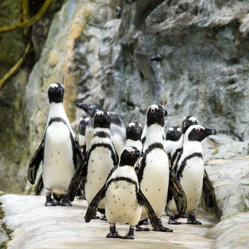 пингвин парада Стоковое Изображение