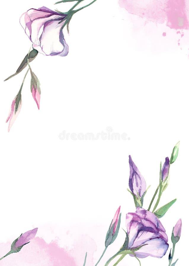 Пинк акварели, розовое estoma на белой предпосылке для приветствий c иллюстрация вектора