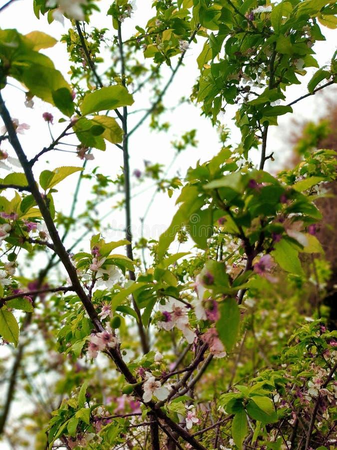 Пинк дерева стоковое фото