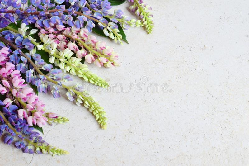 Пинк и пурпурные lupine цветки на мраморной предпосылке День рождения, День матери, карта дня Валентайн, 8-ое марта, свадьбы или  стоковое фото rf