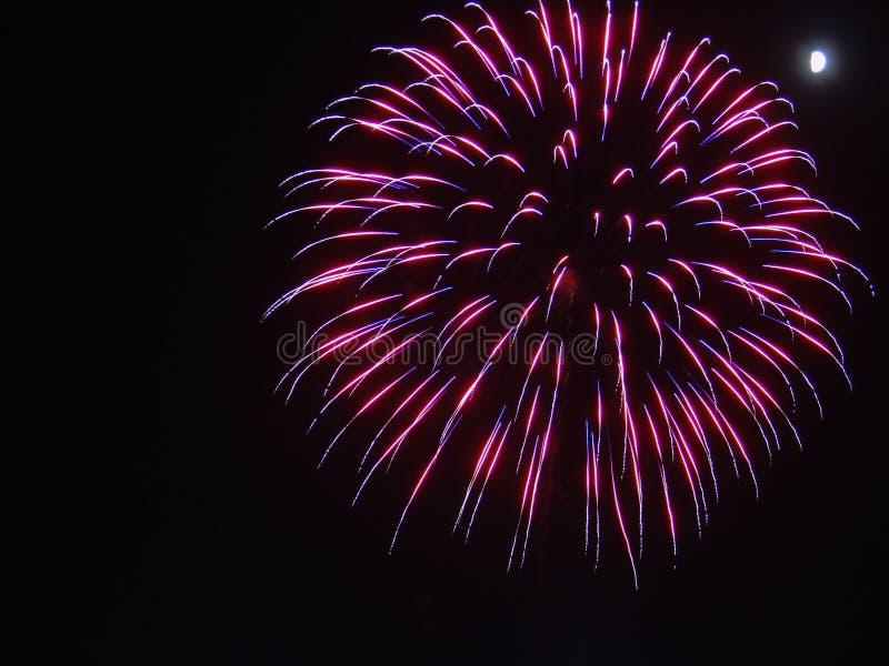 Пинк и пурпурный взрыв фейерверка в черное небо 4-го июля стоковые изображения rf
