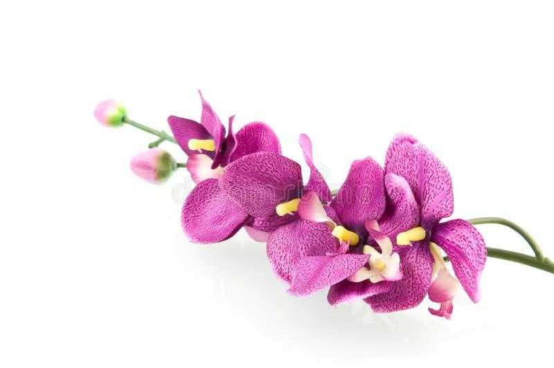 пинк орхидеи стоковое фото