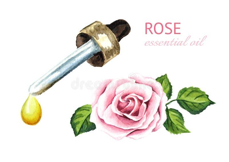 Пинк поднял падение цветка и эфирного масла aromatherapy спа Иллюстрация акварели нарисованная рукой, изолированная на белой пред иллюстрация штока