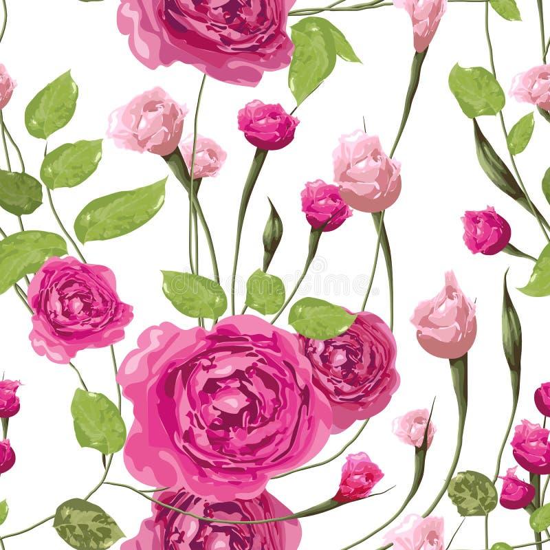 Пинк размягченности поднял цветки с листьями на белой предпосылке иллюстрация вектора