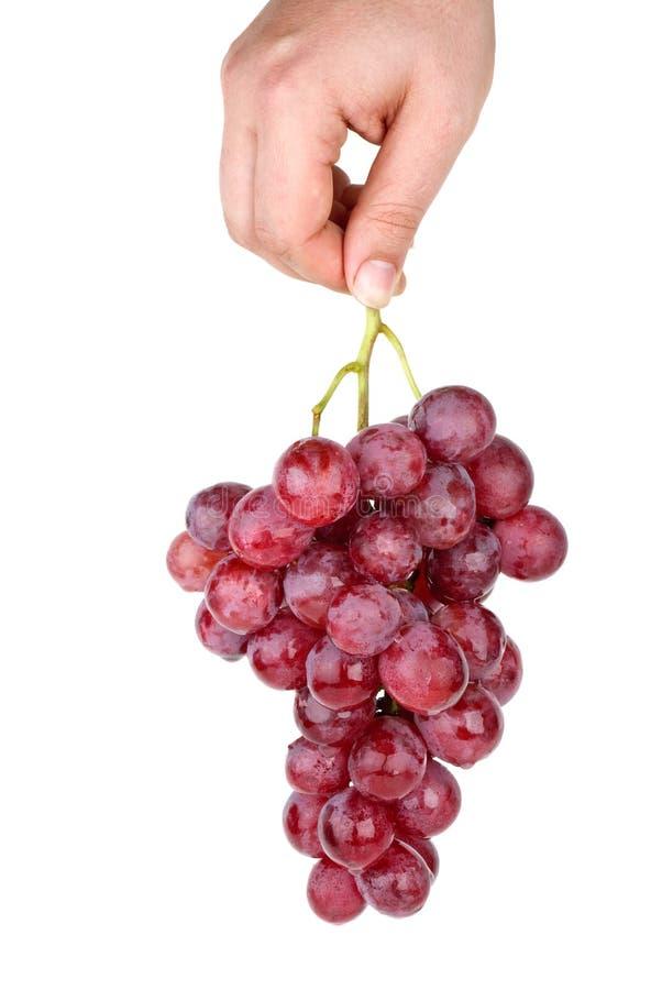 пинк удерживания руки виноградин пука стоковые изображения rf