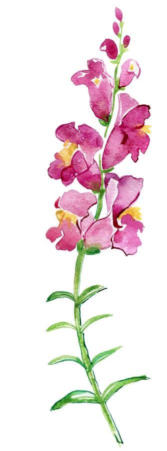 Пинк цветет иллюстрация акварели handmade все все предметы флористической иллюстрации элементов состава индивидуальные вычисляют  иллюстрация вектора