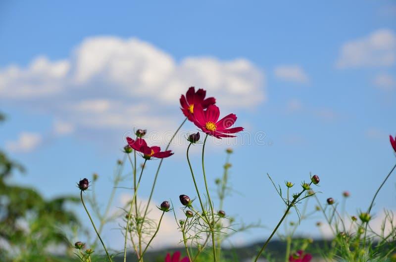 Пинк цветет осень стоковые фотографии rf