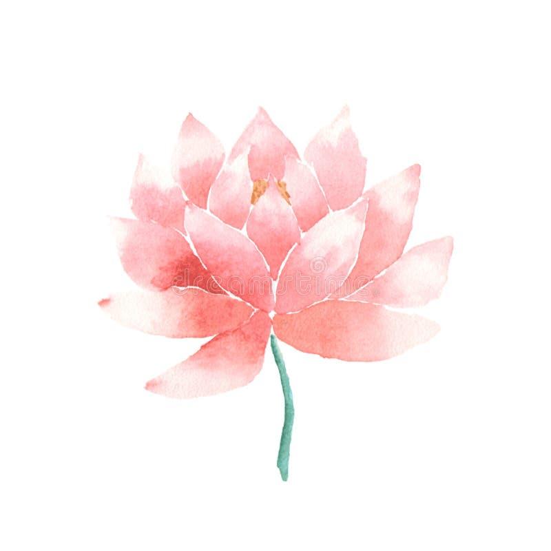 Пинк цветка лотоса акварели вектора иллюстрация вектора