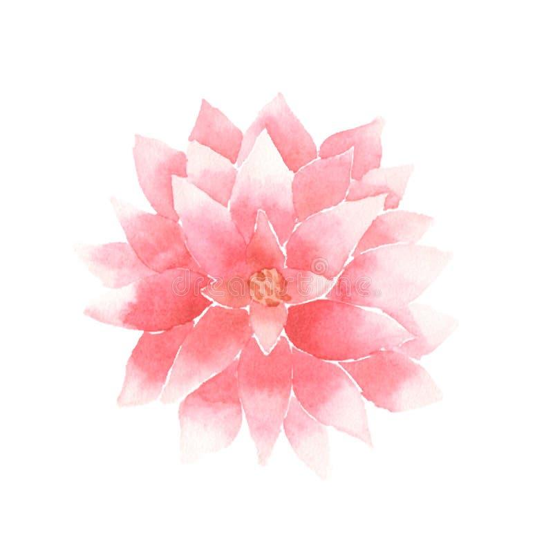 Пинк цветка лотоса акварели вектора иллюстрация штока