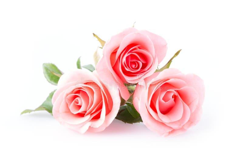 пинк цветка поднял стоковое фото