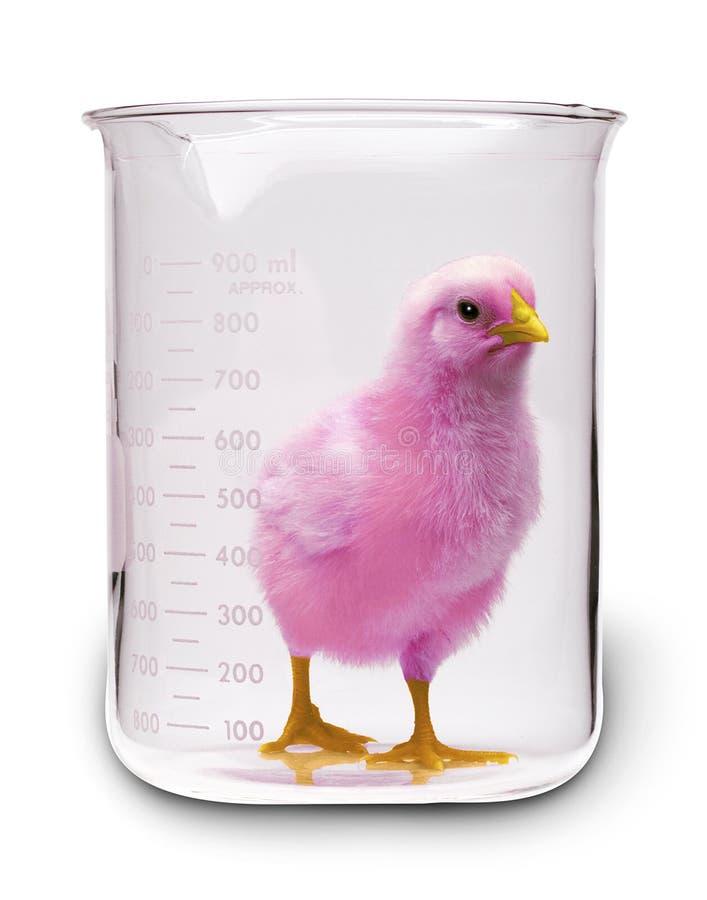 пинк цыпленка доработанный дна стоковое изображение rf