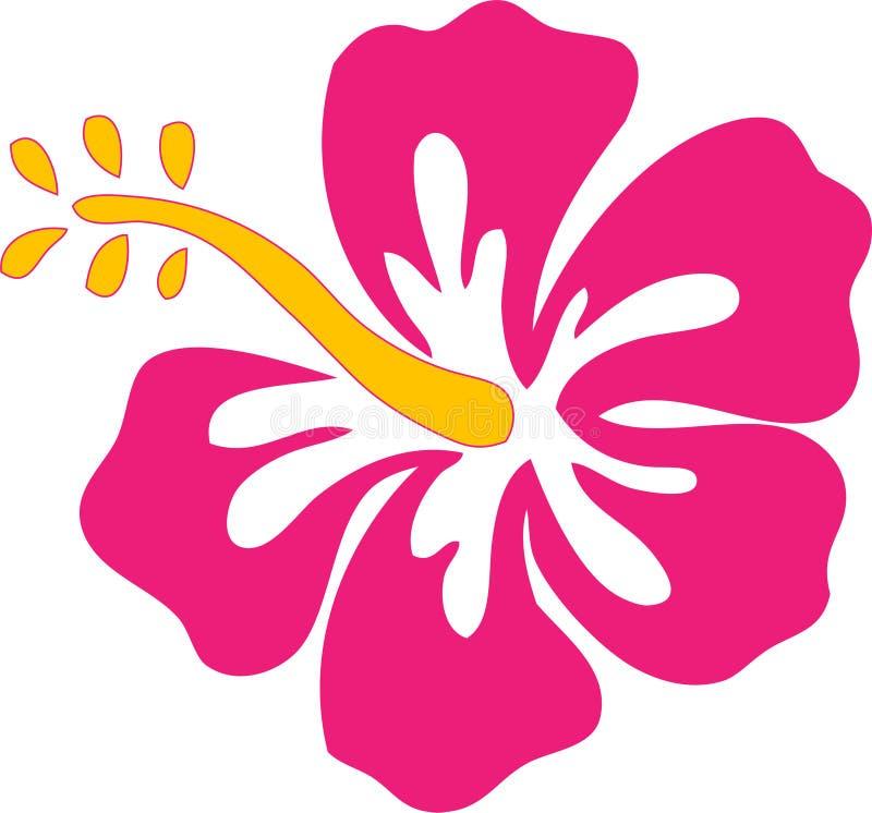 пинк hibiscus цветка иллюстрация вектора