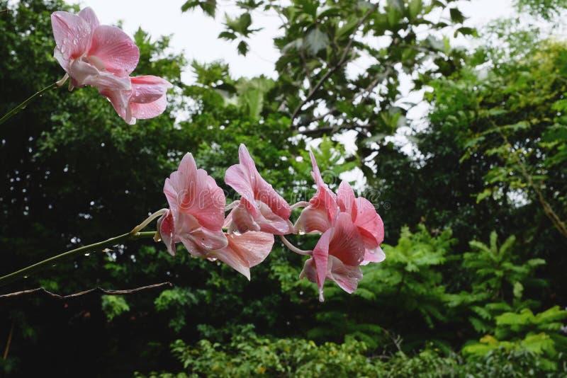 пинк ps орхидеи предпосылки красивейший созданный стоковые изображения