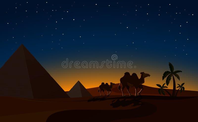 Пирамида и верблюды в сцене ночи пустыни бесплатная иллюстрация