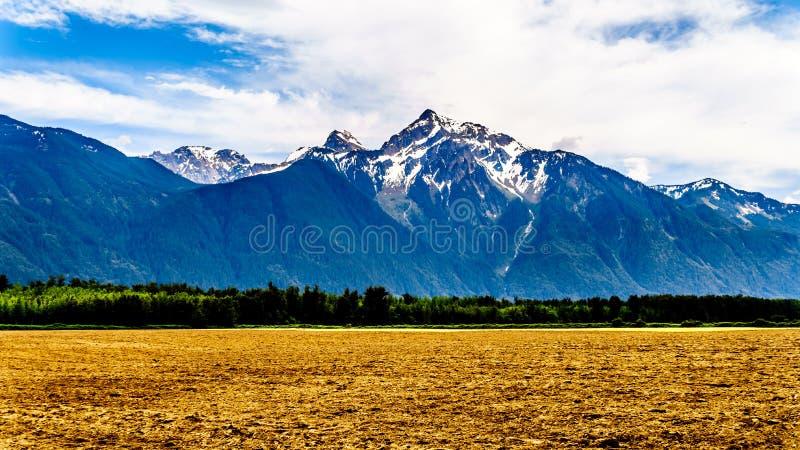 Пирамида сформировала гору Cheam, или пик Cheam, возвышаясь над долиной Fraser как увидено от шоссе Lougheed около Agassiz стоковая фотография rf