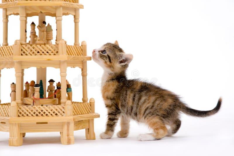 пирамидка котенка стоковая фотография rf