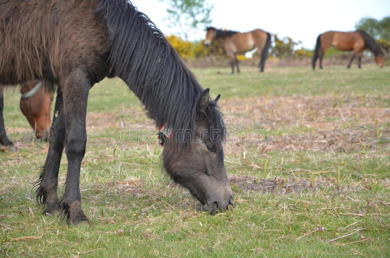 Пировать лошади 2 стоковое изображение rf