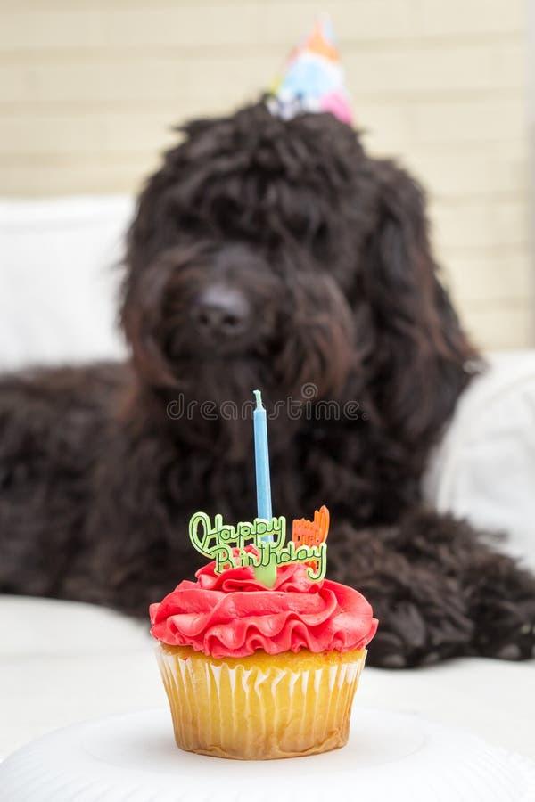 Пирожное при свеча и черная меховая собака лежа на белом стуле нося шляпу вечеринки по случаю дня рождения на заднем плане стоковые фотографии rf