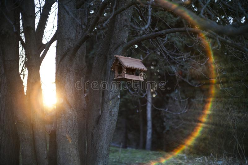 Пирофакел и птица радуги стоковые фото