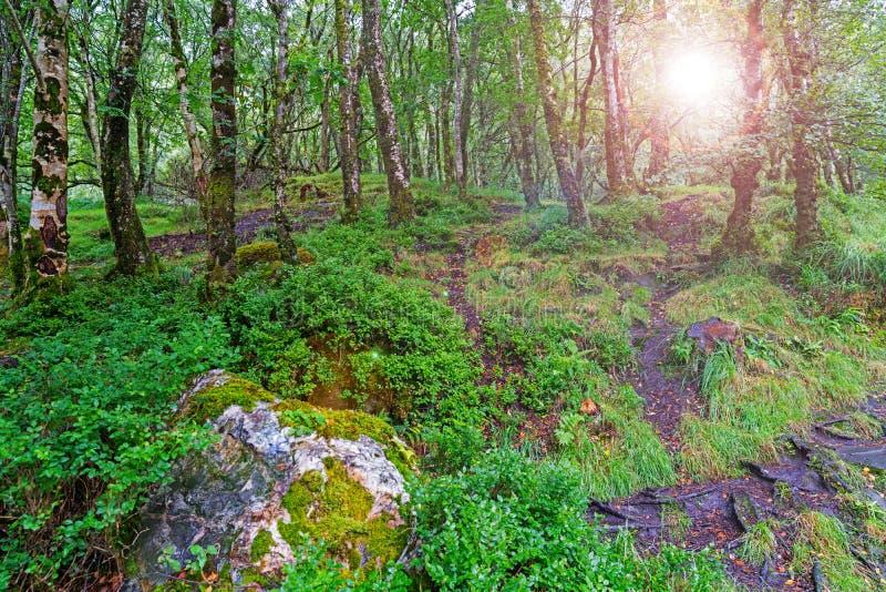 Пирофакел объектива через окружающую среду национального парка гор Wicklow, Glendalough стоковые фотографии rf