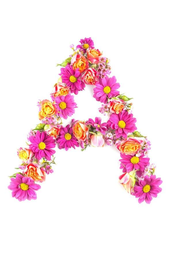 Письма и номера сделанные от изолированных цветков в реальном маштабе времени на белой предпосылке, делают текст с алфавитом цвет стоковые фотографии rf