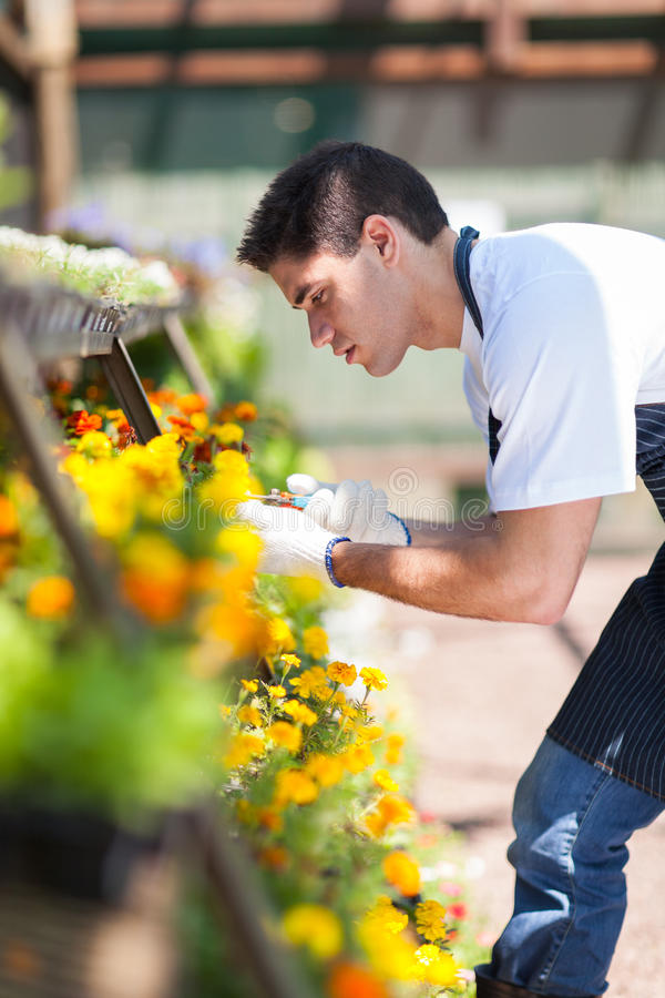 Питомник Florist работая стоковые фотографии rf