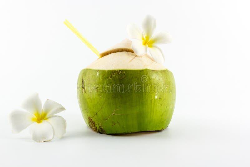 Питье воды кокоса. стоковые изображения rf