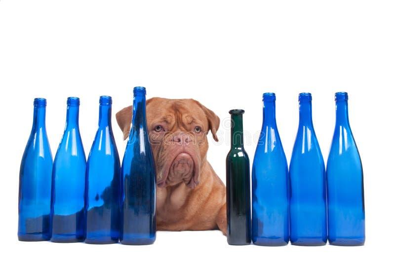 питье достаточно имеет меня думает стоковые изображения rf