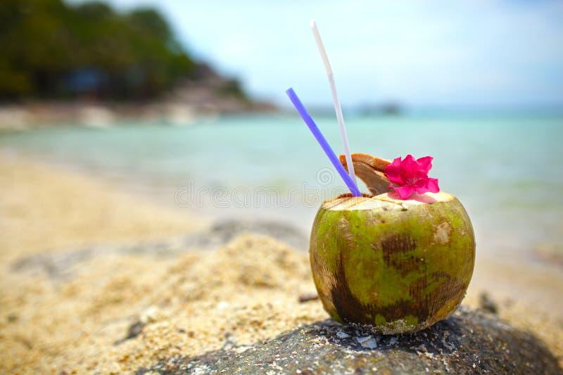 Питье кокоса стоковые фотографии rf