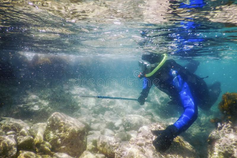 Плавание водолаза Spearfishing в морской воде мелководного моря стоковое изображение