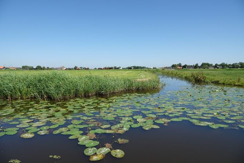 Плавание на Wielervaart к пив во Фрисландии в Нидерланд стоковые изображения rf