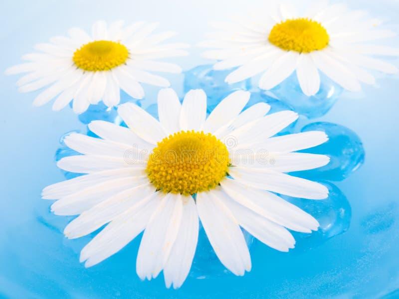 плавать стоцветов стоковое фото