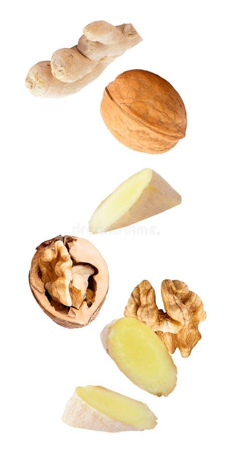 плавая грецкие орехи и имбирь изолированные на белой предпосылке стоковая фотография