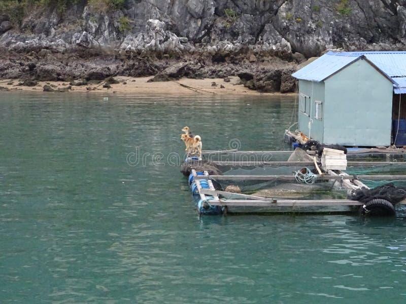 плавая дома в море стоковое изображение rf