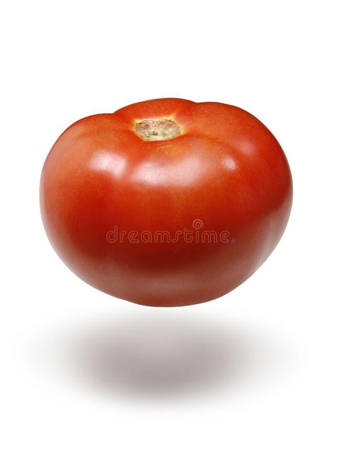 плавая красный томат стоковые изображения