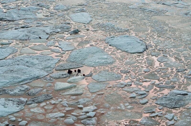 плавая льдед Вода отражая небо Абстрактный фон стоковые фотографии rf