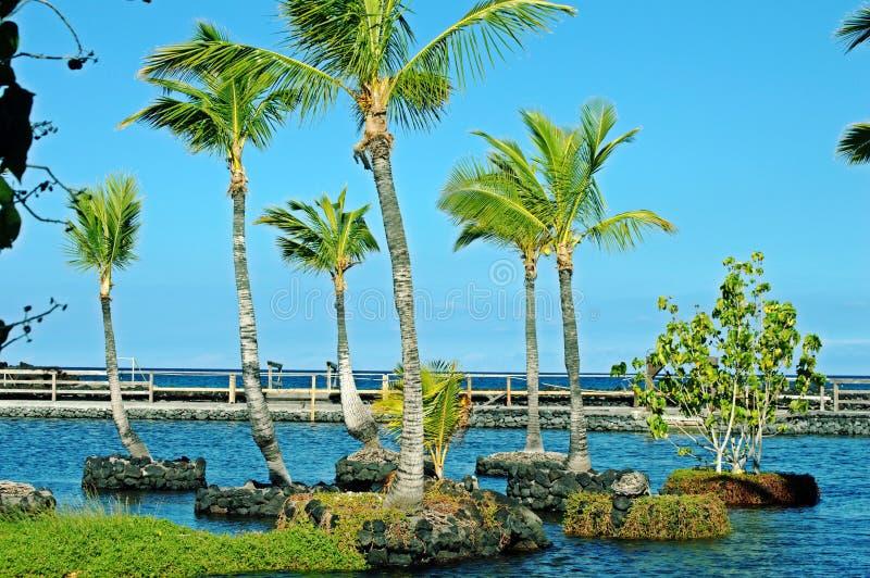 Плавая пальмы стоковое изображение