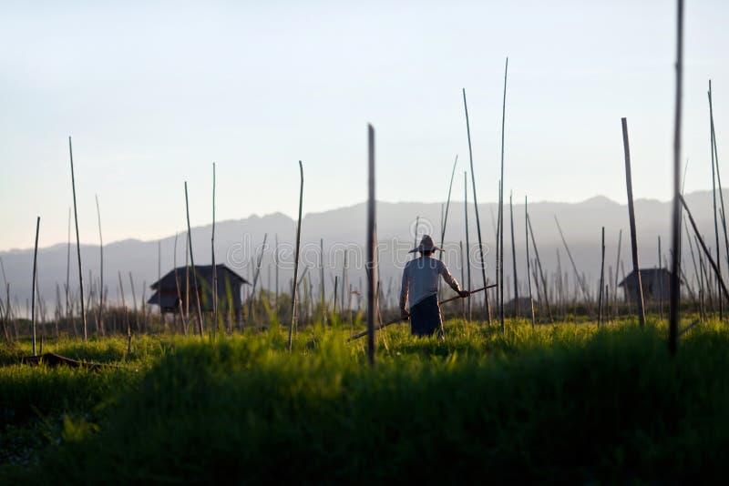 плавая положение Шани myanmar озера inle сада стоковые изображения