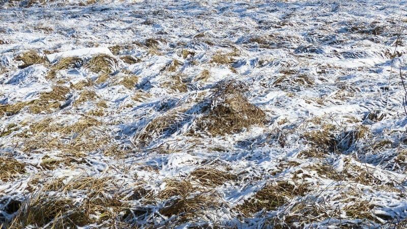 Плавя снег на траве на весне стоковое изображение rf