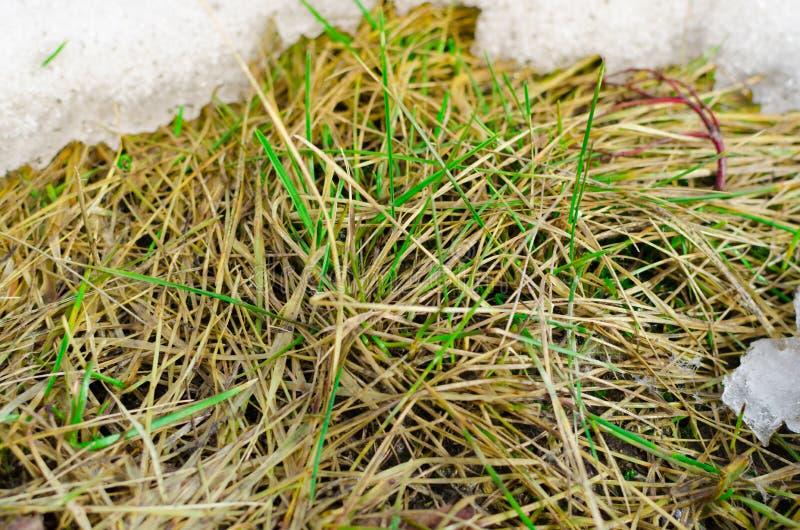 Плавя снег показывает мертвую траву в поле стоковые изображения
