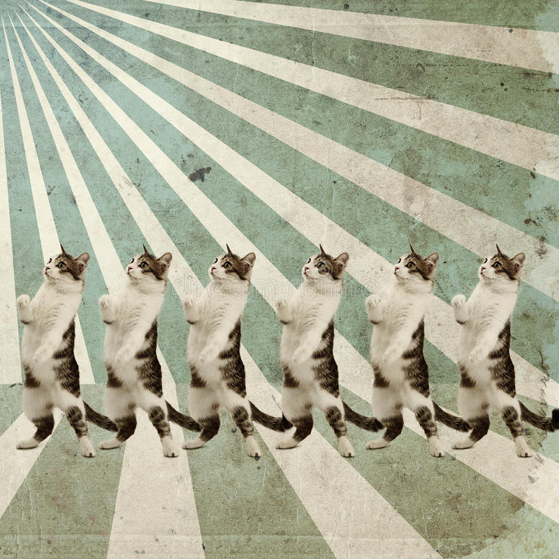 Плакат котов танцы ретро стоковые изображения rf