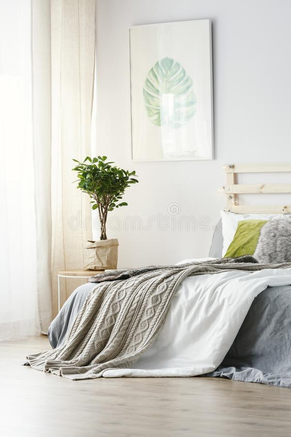 Плакат над заводом рядом с кроватью с серым одеялом в минимальном bedr стоковое фото